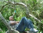 Eddy sleepin on his tree