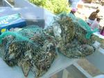 2 bags of JUMBO oysters