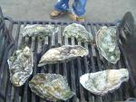 the oysters a grillin