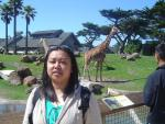 me & the giraffes