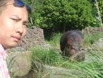 eddy & the hippo